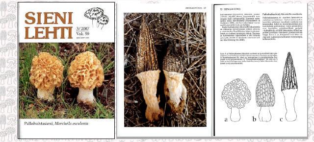 Sienilehti