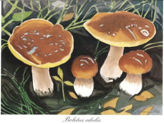 Sienten Säilöminen